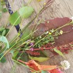 Wild harvest - a selection of herbs and medicines on a wooden table