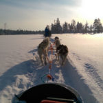 Husky Dog Sledge Ride