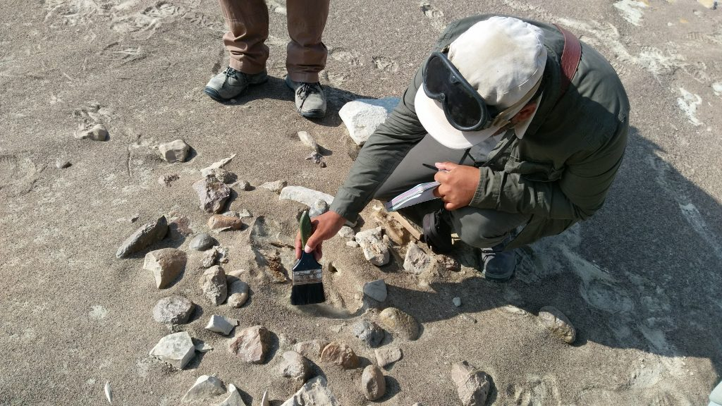 Uncovering whale bones in the desert on a scientific research expedition