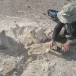 Archaeologist digging up a grave of an ancient pigmy in the desert in Peru