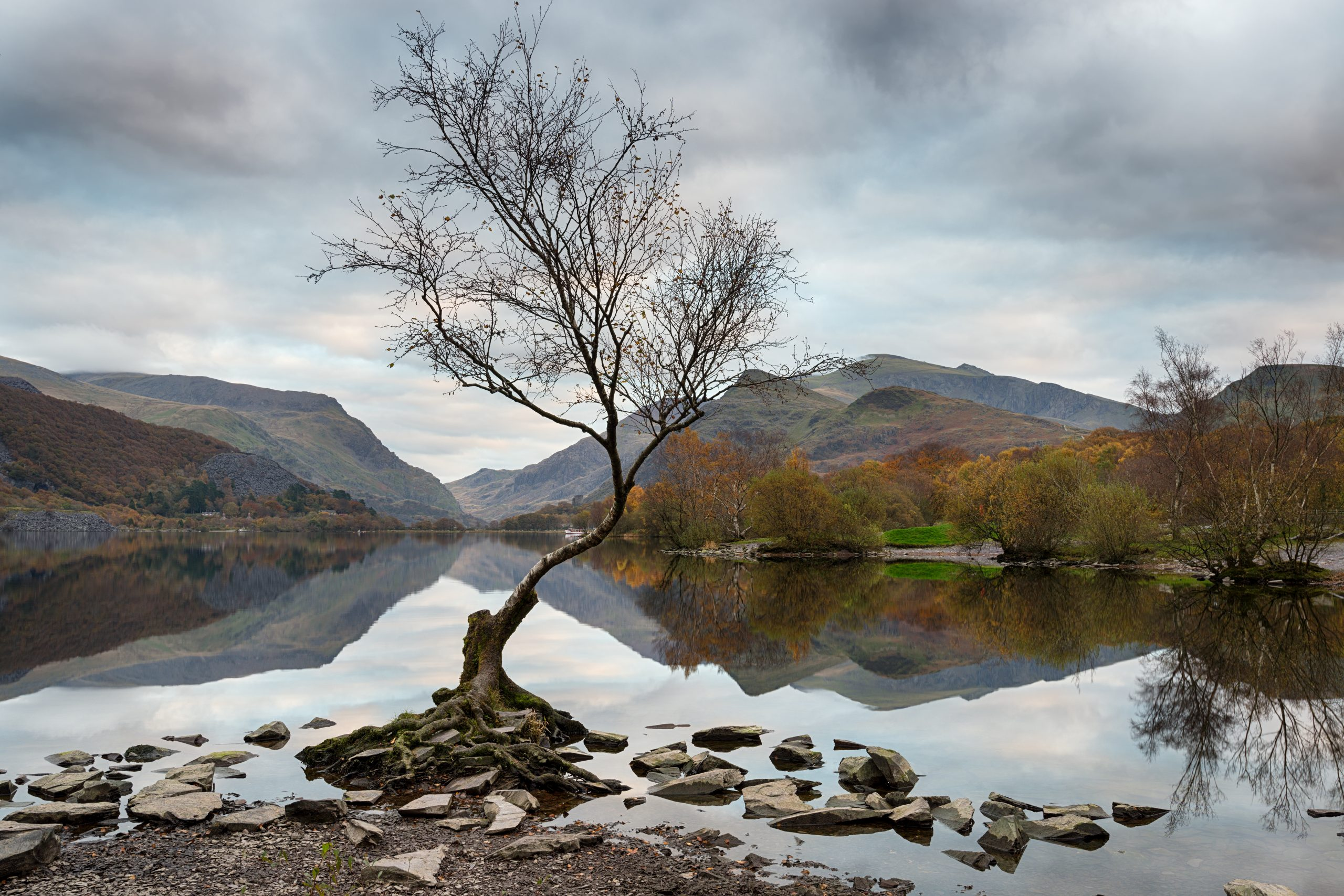 Snowdonia in the autumn time by a lake with a birch tree at the edge and mountains in the distance.